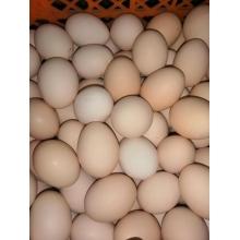 丰润76小区会员体验柴鸡蛋(其他区域会员勿拍不发货)