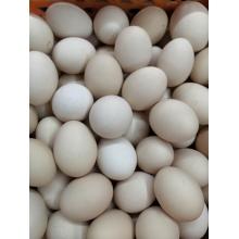 柴鸡蛋3斤装